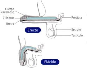 implantes de pene
