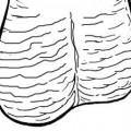 Ejercicios Testiculares: Mantener sus bolas colgando de forma saludable