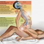Vida Saludable: Por qué el sexo es bueno para la salud?