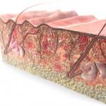 Piel del pene arrugada: causas y medidas preventivas